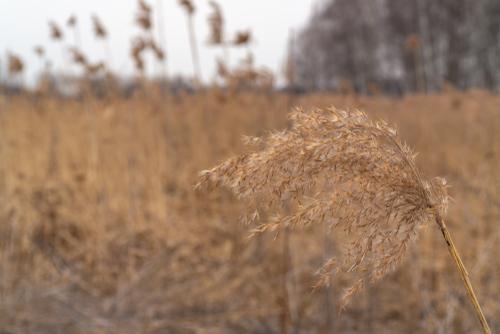 dried vegetation-img-blog